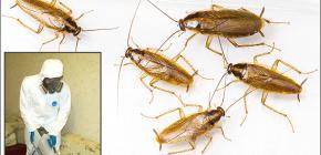 Λεπτομέρειες σχετικά με την επεξεργασία των χώρων από διάφορα έντομα: σημαντικές αποχρώσεις