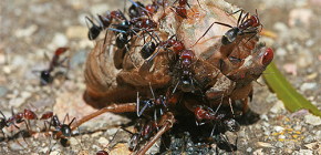 Τι μυρμήγκια τρώνε