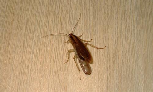 Όπου οι κατσαρίδες κρύβονται στο διαμέρισμα ...