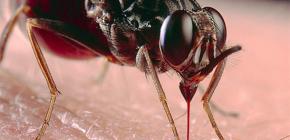 Σχετικά με τα τσιμπήματα εντόμων και τη θεραπεία τους