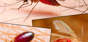 Τσιμπήματα διαφόρων τύπων εντόμων και των φωτογραφιών τους