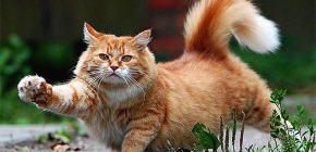 Πώς να αφαιρέσετε γρήγορα και με ασφάλεια τους ψύλλους από μια γάτα