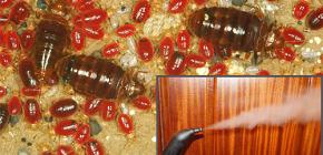 Σε ποια θερμοκρασία πεθαίνουν τα σκουλήκια κρεβατιών και θα βοηθήσει η επεξεργασία ατμού;