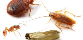 Πώς να καταπολεμήσει τα οικιακά έντομα στο διαμέρισμα