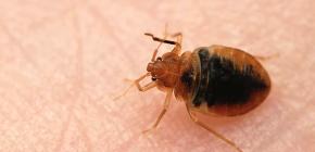Τα bug bugs και τα μέσα αυτο-ελέγχου