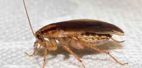 Μάθετε πού πηγαίνουν οι κατσαρίδες και γιατί εξαφανίστηκαν