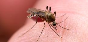 Μέσα για την προστασία από τα τσιμπήματα εντόμων: επισκόπηση των αποτελεσματικών επιλογών