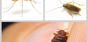 Εντομοκτόνα εντομοαπωθητικά στο σπίτι: μια ανασκόπηση των ναρκωτικών