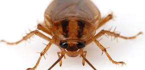 Φωτογραφίες από διάφορες κατσαρίδες