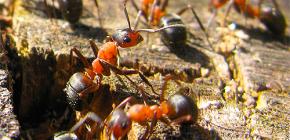 Πώς τα μυρμήγκια προετοιμάζονται για το χειμώνα