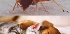 Μπορούν οι κατοικίδια ζώα να δαγκώνουν κατοικίδια ζώα (γάτες, σκυλιά, κοτόπουλα);