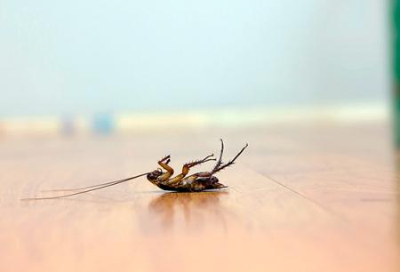 Επιλέγοντας ένα αποτελεσματικό δηλητήριο για κατσαρίδες