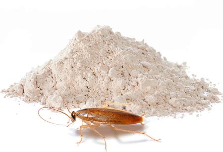 Σκόνη για την εξολόθρευση των κατσαρίδων: μια ανασκόπηση των αποτελεσματικών μέσων